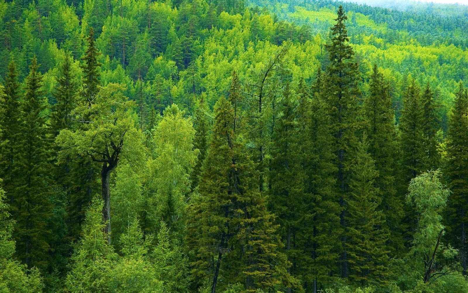 amazon_forest_trees-wide.jpg